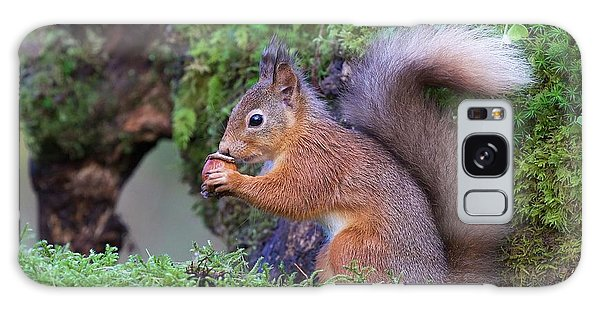 Furry Galaxy Case - Red Squirrel by Ray Cooper