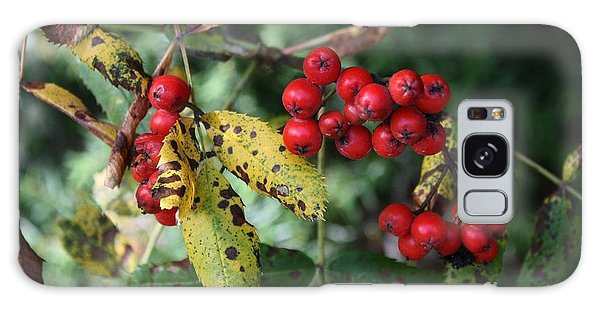 Red Summer Berries - Whistler Galaxy Case by Amanda Holmes Tzafrir