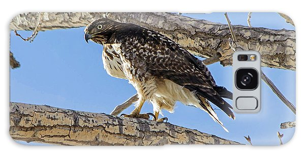Red Tail Hawk In Cottonwood Tree Galaxy Case
