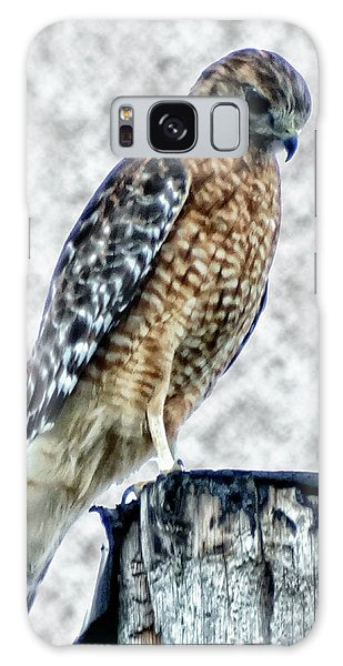 Red Tail Hawk Looking Down Galaxy Case