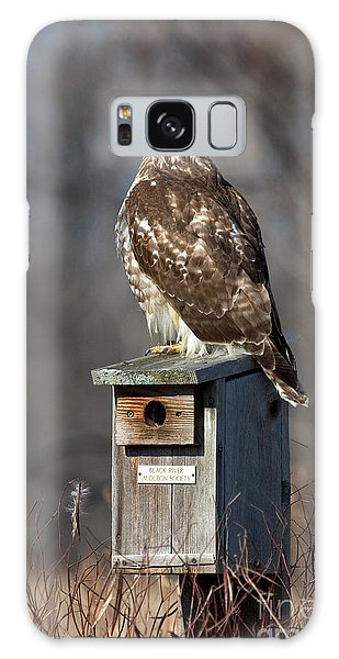 Red-tailed Hawk Galaxy Case