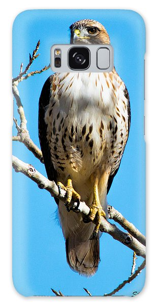 Red Tailed Hawk Standing Tall Galaxy Case by Stephen  Johnson