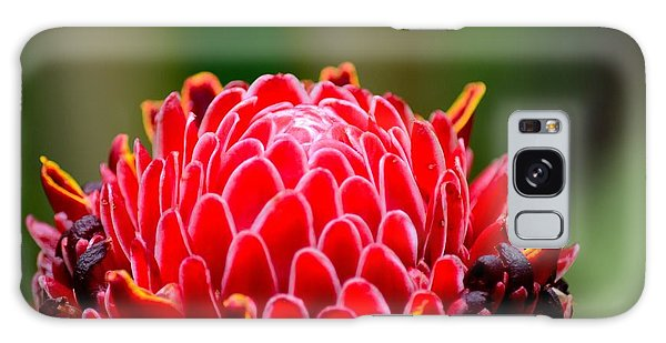 Red Torch Ginger Flower Head From Tropics Singapore Galaxy Case