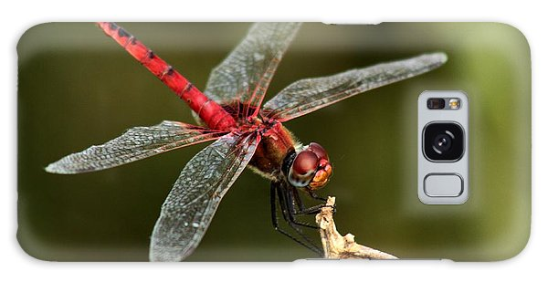 Red-veined Darter  - My Joystick Galaxy Case by Ramabhadran Thirupattur