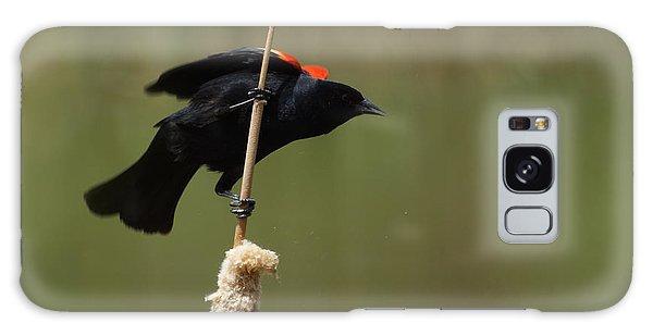 Red Winged Blackbird 3 Galaxy Case by Ernie Echols