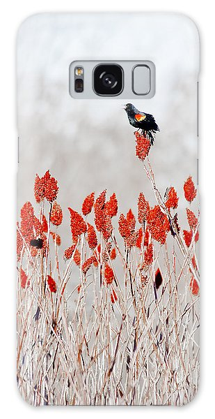 Red Winged Blackbird On Sumac Galaxy Case by Steven Ralser