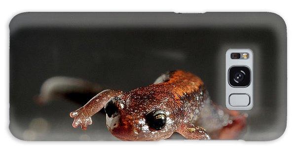 Salamanders Galaxy Case - Redback Salamander Plethodon Cinereus by Aaron Ansarov