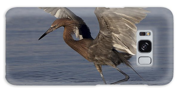 Reddish Egret Fishing Galaxy Case by Meg Rousher