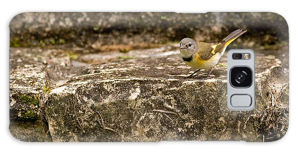 Redstart In Ruins Galaxy Case