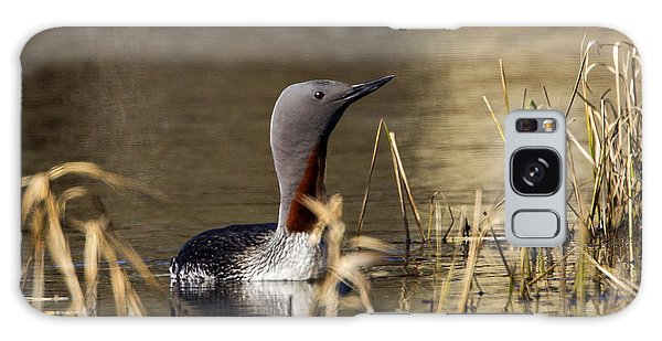 Redthroated Loon Galaxy Case