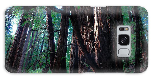 Redwood Forest Galaxy Case