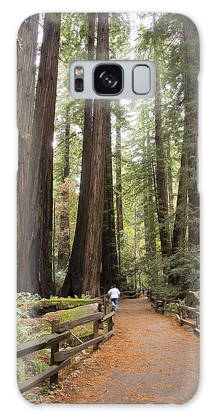 Redwood Trees Galaxy Case