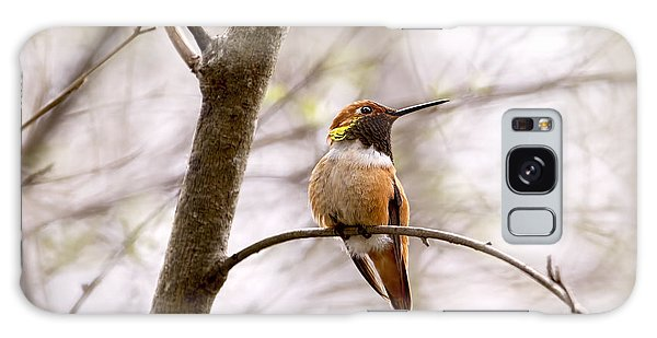 Regal Rufous Hummingbird Sitting Galaxy Case by Peggy Collins