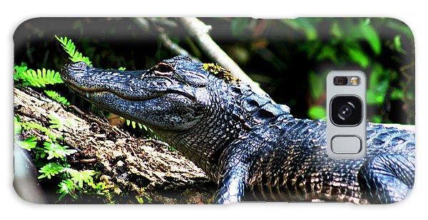 Resting Alligator  Galaxy Case