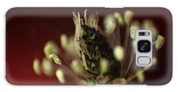 Ribwort Plantain  Galaxy Case by Eden Baed
