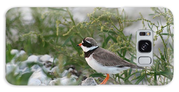 Ringed Plover On Rocky Shore Galaxy Case
