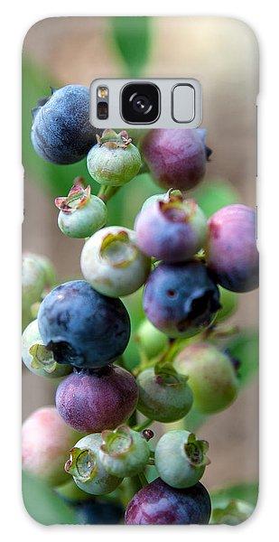 Ripening Blueberries Galaxy Case