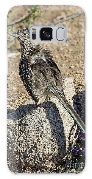 Greater Roadrunner Galaxy Case - Roadrunner Warming In Sun by Anthony Mercieca