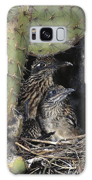 Greater Roadrunner Galaxy Case - Roadrunners In Nest by Anthony Mercieca