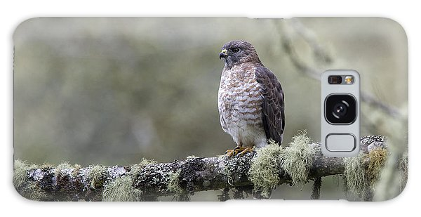Roadside Hawk Perched On A Lichen-covered Branch 2 Galaxy Case