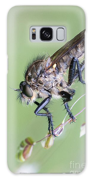 Robber Fly Asilinae Close Up Galaxy Case