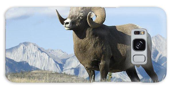 Rocky Mountain Big Horn Sheep Galaxy Case