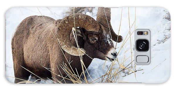 Rocky Mountain Bighorn Sheep Galaxy Case