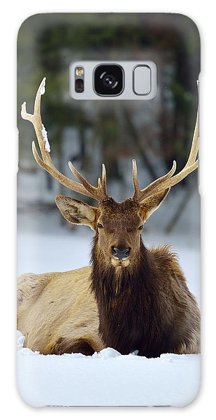 Rocky Mountain Elk Galaxy Case