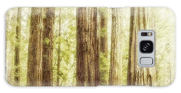 Romantic Forest Muir Woods National Monument California Galaxy Case by Marianne Campolongo
