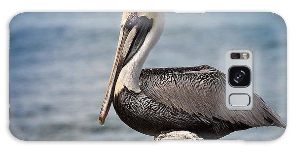Roosting Pelican Galaxy Case
