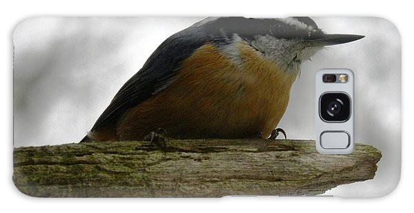 Rose Breasted Nuthatch Galaxy Case