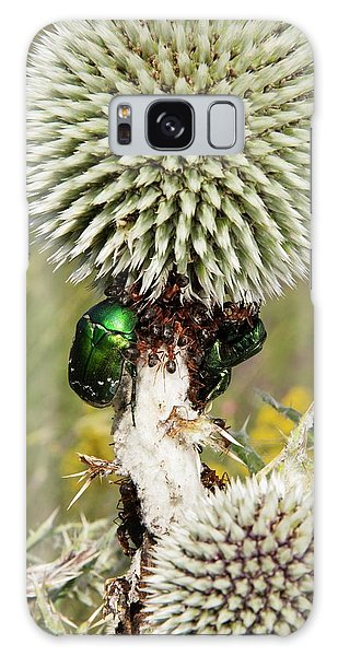 Rose Chafers And Ants On Thistle Flowers Galaxy Case
