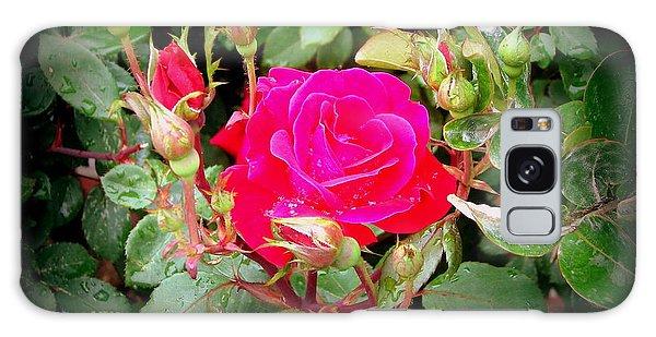 Rose Garden Centerpiece Galaxy Case by Pamela Hyde Wilson
