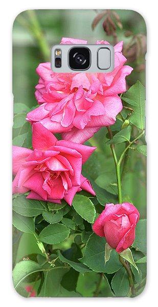 Hybrid Galaxy Case - Rose (rosa 'freiher Von Marshall') by Brian Gadsby/science Photo Library