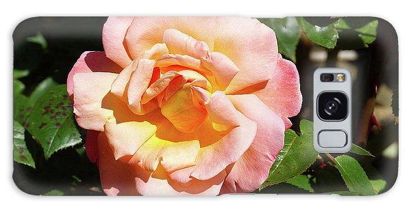 Hybrid Galaxy Case - Rose (rosa Troika = 'poumidor') by Neil Joy/science Photo Library