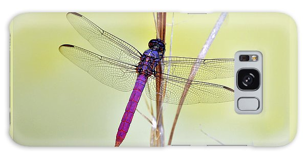 Roseate Skimmer Dragonfly Galaxy Case by Al Powell Photography USA