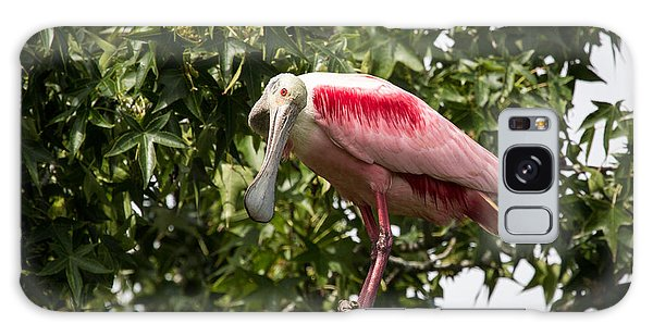 Roseate Spoonbill  What Are You Looking At 2 Galaxy Case