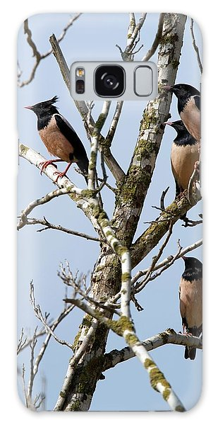 Rosy Starling (sturnus Roseus) Galaxy Case