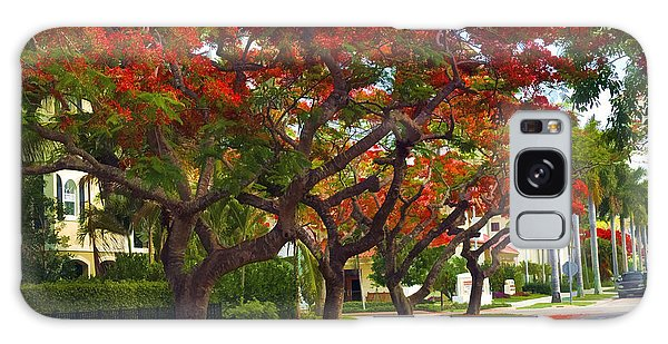 Royal Poinciana Trees In Blooming In South Florida Galaxy Case