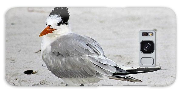 Royal Tern - Adult Nonbreeding Galaxy Case