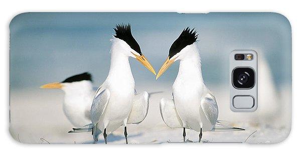 Royal Colony Galaxy Case - Royal Terns by Paul J. Fusco
