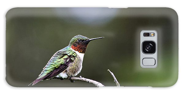 Ruby Throated Hummingbird Spotlight Galaxy Case
