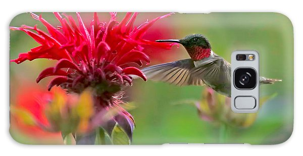 Ruby Throated Hummingbird With Beebalm Galaxy Case