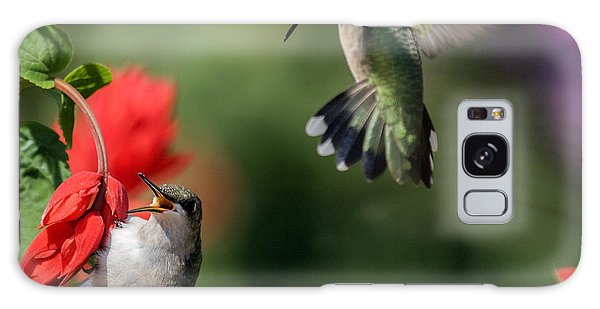 Ruby-throated Hummingbirds Galaxy Case by David Lester