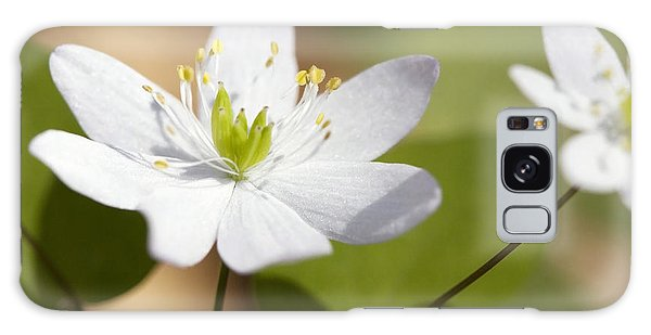 Rue Anemone Galaxy Case by Melinda Fawver