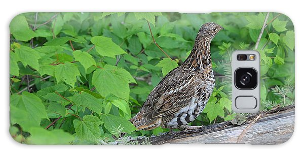 Ruffed Grouse Galaxy Case