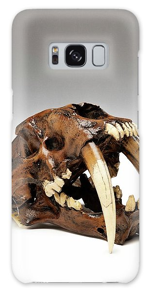 Anatomical Model Galaxy Case - Sabre-toothed Cat Skull by Ucl, Grant Museum Of Zoology
