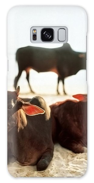 Sacred Cows On The Beach Galaxy Case