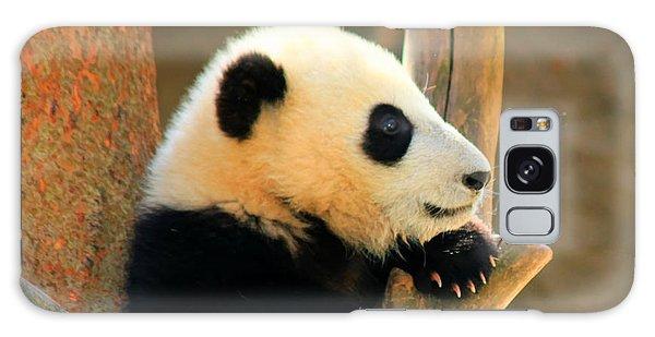 San Diego Zoo Panda Bear Xiao Liwu Galaxy Case