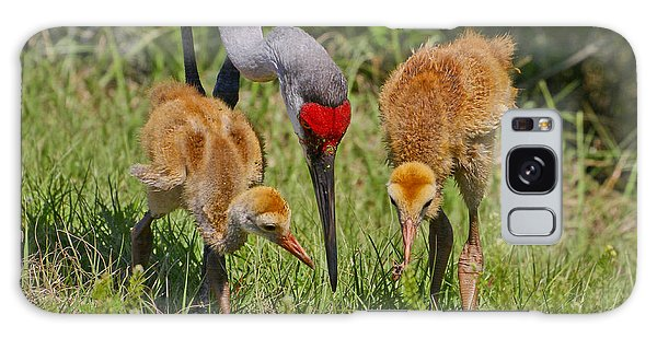 Sandhill Crane Family Feeding Galaxy Case